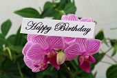 Happy birthday card with pink orchid