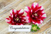 Congratulations card with dahlia flowers
