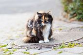 Cat On A Street In The City, Black, White And With Green Eyes