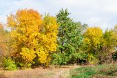 Yellow And Green Trees