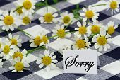 Sorry card with chamomile flowers on navy blue checkered cloth