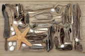 stock photo of driftwood  - Starfish and sea shell collage with driftwood over oak wood  background - JPG