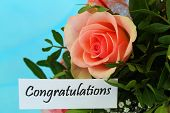 Congratulations card with pink rose on blue background