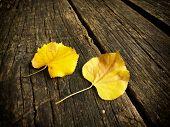 autumnal leaves on wood background