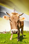 Cow With Flag On Background Series - Brunei