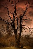 A Dead Tree In Hell