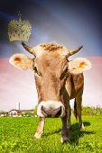 Cow With Flag On Background Series - Liechtenstein