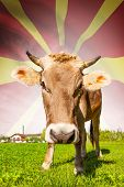 Cow With Flag On Background Series - Republic Of Macedonia