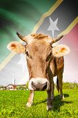 Cow With Flag On Background Series - Federation Of Saint Christopher And Nevis