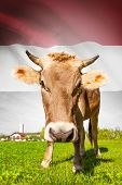 Cow With Flag On Background Series - Yemen