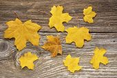 Autumn Leaves over old wooden background