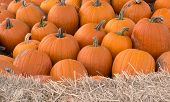 Pumpkin Sharp Background