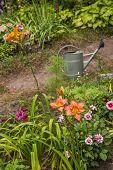 Bed Of Daylilies And Dwarfed Dahlias