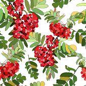 Beautiful pattern  rowan berries