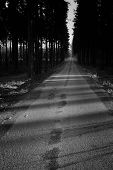 image of tree lined street  - Street in the wood black and white - JPG