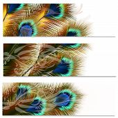 Fashion Colorful Backgrounds Set With Peacock Feathers