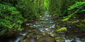 picture of backwoods  - River rushes through the lush spring foliage of the Great Smoky Mountain National Park - JPG
