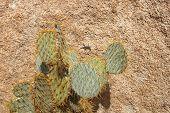 Lizard And Cactus