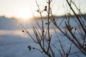 Dry bush silhouette