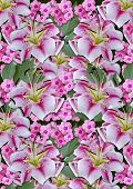 Background from white lilies andpink flowerson a black background