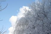 Frosty hoarfrost