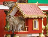 Monkeys in temple