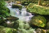Jim Bales Rapids