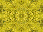 Yellow Rapeseed Kaleidoscope
