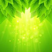 Spring fresh green leaves. Vector illustration