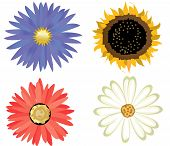 Set of nice flowers, vector, illustration
