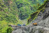 Clear The Highway After Landslide