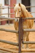 Beautiful Horse In Fence