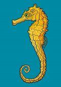 Decorative Isolated Seahorse