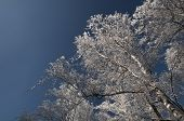 Snow Covered Trees Against Sky