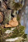 Zhavoronki, Russian Rye Cookies For Spring Equinox Selebration In Nature