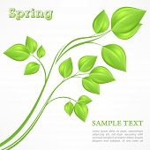 Spring Branch With Green Leaves On White
