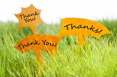 Three Labels With Thank You And Thanks On Grass