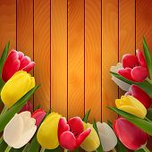 Tulips On Boards