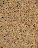 pic of clos  - Clos up shot of Indian poppy seeds used as spice - JPG