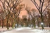 Central Park Night, New York City