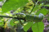 image of green snake  - Green snake in tree  - JPG