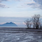 stock photo of tide  - Dead trees in beach at low tide in bako national park sarawak borneo malaysia - JPG