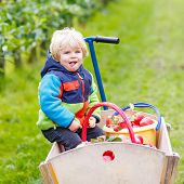 pic of trolley  - Cute little toddler boy sitting in wooden trolley with red apples and eating fruits - JPG