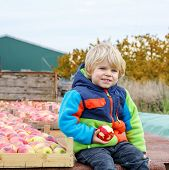 picture of apple orchard  - Adorable funny toddler boy sitting on tractor with red apples and eating fruits - JPG