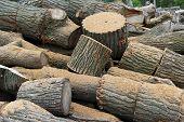 stock photo of firewood  - Several cut oak logs and sawdust create a firewood background  - JPG