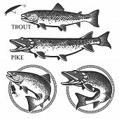 foto of trout fishing  - Set of vector fishing emblem with trout and pike - JPG