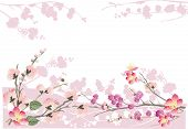 picture of cherry-blossom  - illustration with cherry tree flowers on white background - JPG
