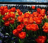 Nava Tulips Painting