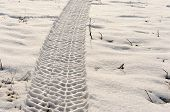 Tire Track In The Snow