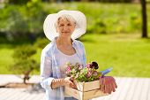 gardening and people concept - senior woman or gardener with garden tools and flowers in wooden box  poster